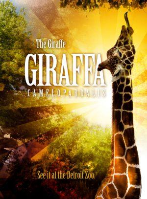 giraffa5